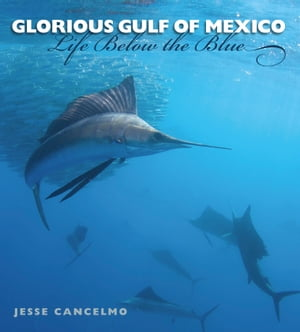 Glorious Gulf of Mexico Life Below the Blue