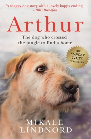 Arthur The dog who crossed the jungle to find a home