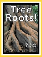 Just Tree Root Photos! Big Book of Photographs & Pictures of Tree Roots, Vol. 1 by Big Book of Photos
