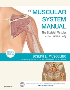 The Muscular System Manual The Skeletal Muscles of the Human Body