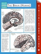 The Brain (Human) (Speedy Study Guides) by Speedy Publishing