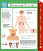 Endocrine System (Speedy Study Guides) by Speedy Publishing