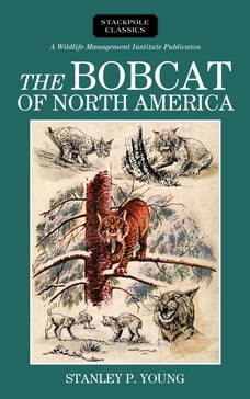 The Bobcat of North America