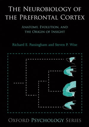 The Neurobiology of the Prefrontal Cortex Anatomy,  Evolution,  and the Origin of Insight
