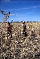 A Beginners Guide to Pheasant Hunting by Reema McGinnity