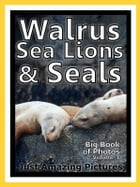 Just Walrus, Seal, and Sea Lion Photos! Big Book of Photographs & Pictures of Walruses, Seals, and Sea Lions, Vol. 1 by Big Book of Photos