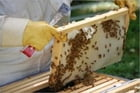 A Beginners Guide To Beekeeping: Everything You Need To Know To Become A Successful Beekeeper by Ramon Sullivan