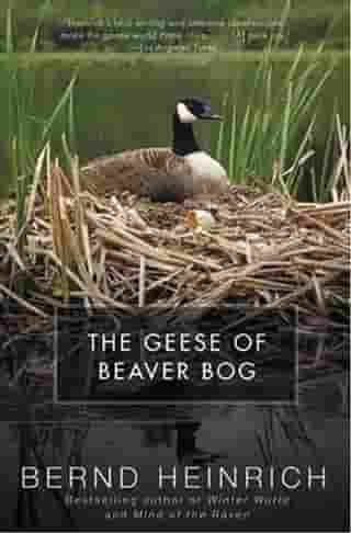 The Geese of Beaver Bog by Bernd Heinrich
