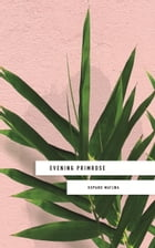 Evening Primrose: a heart-wrenching novel for our times by Kopano Matlwa
