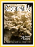 Just Coral Photos! Big Book of Photographs & Pictures of Underwater Sea Coral, Vol. 1 by Big Book of Photos