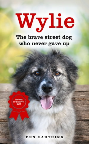 Wylie The Brave Street Dog Who Never Gave Up