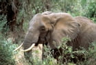 In Africa: Hunting Adventures in the Big Game Country