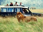 African Safari Vacations for Beginners by Adam Sol