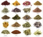 A Beginners Guide to Culinary Herbs by Julia Sanders
