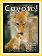 Just Coyote Photos! Big Book of Photographs & Pictures of Coyotes, Vol. 1 by Big Book of Photos
