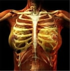 Costochondritis: Causes, Symptoms and Treatments by Tessie Sumner