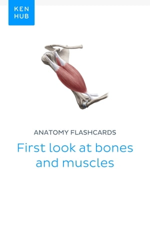 Anatomy flashcards: First look at bones and muscles: Learn all bones, ligaments and muscles on the go