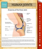Human Joints: Speedy Study Guides by Speedy Publishing