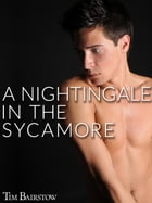 A Nightingale in the Sycamore by Tim Bairstow
