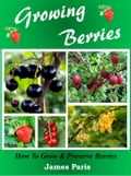 Growing Berries - How To Grow and Preserve Berries 79932683-24cd-4fec-9c45-512bb5b18ad7