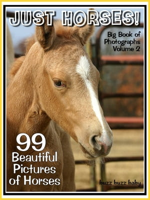 99 Pictures: Just Horse Photos! Big Book of Photographs Vol. 2b