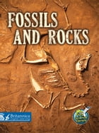 Fossils and Rocks by Kimberly M. Hutmacher