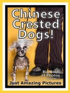 Just Chinese Crested Dog Photos! Big Book of Photographs & Pictures of Chinese Crested Dogs, Vol. 1 by Big Book of Photos