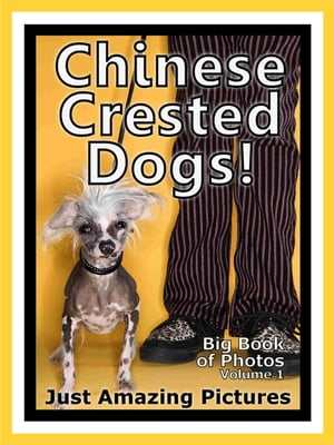 Just Chinese Crested Dog Photos! Big Book of Photographs & Pictures of Chinese Crested Dogs,  Vol. 1