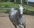 Horse Training: An Essential Guide For Beginners by Vincent Elkins