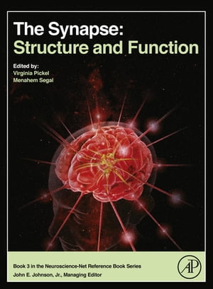 The Synapse Structure and Function