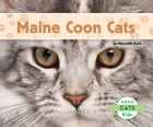 Maine Coon Cats by Meredith Dash