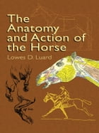 The Anatomy and Action of the Horse by Lowes D. Luard
