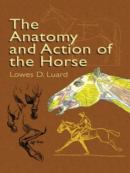 Book The Anatomy and Action of the Horse by Lowes D. Luard