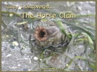 Today I Discovered The Horse Clam by Heather Stannard