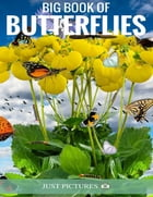 Big Book of Butterflies by Just Pictures!