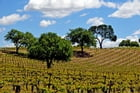 California Wine Country - The Napa Valley by Lisa Manterfield