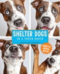 Shelter Dogs in a Photo Booth d69d83e6-f4d1-45b5-a5ab-1f6068c73265