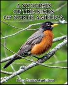 A Synopsis of the Birds of North America by John James Audubon