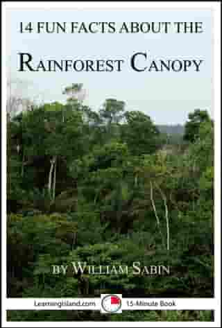 14 Fun Facts About the Rainforest Canopy by William Sabin