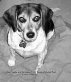 Cleo Beagle and the Letter L by Karen Wutzke