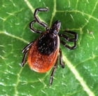 Rocky Mountain Spotted Fever: Causes, Symptoms and Treatments by Denny Domke