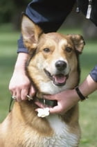 Dog Protection Training for Beginners by Shea Corliss