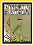 Just Praying Mantis Photos! Big Book of Photographs & Pictures of Praying Mantis, Vol. 1 by Big Book of Photos
