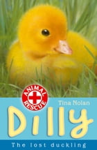 Dilly the lost duckling