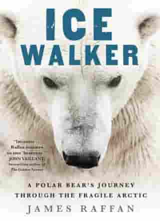 Ice Walker: A Polar Bear's Journey through the Fragile Arctic