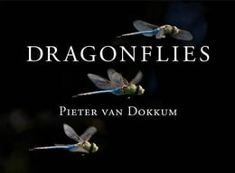 Book Dragonflies: Magnificent Creatures of Water, Air, and Land by van Dokkum, Pieter