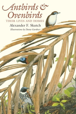 Book Antbirds and Ovenbirds: Their Lives and Homes by Alexander F.  Skutch
