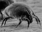 A Crash Course on How to Get Rid of Mites by Steve Reeves