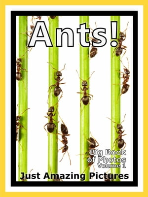 Just Ant Colony Photos! Big Book of Photographs & Pictures of Ants and Ant Colonies,  Vol. 1