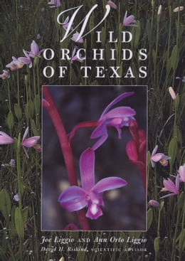 Book Wild Orchids of Texas by Joe  Liggio